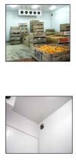 Desverdizado de citrus