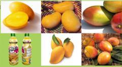 Pulpa de fruta de mango