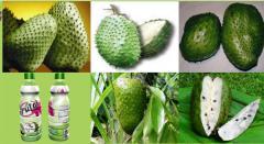 Frutas tropicales: Pulpa de Guanabana