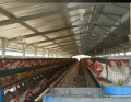 Equipment for the outdoor cultivation and the maintenance of meat species bird of and laying hens