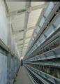 Industria Avícola - Galpones para Ponedoras Batería