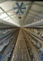 Industria Avícola - Galpones para Ponedoras 2 Pisos