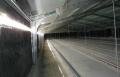 Industria Avícola - Control de Luz
