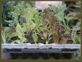 Plantines Orgánicos de Huerta