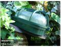 Tortugas plásticas, ovalada verde