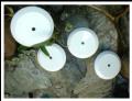 Florón (Accesorios iluminación)