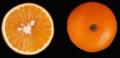 Naranja Hamlin