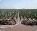 Línea de Fertilizantes Bioaggil