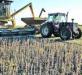 Versiones sobre una suba de las retenciones hicieron caer la soja