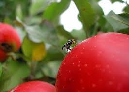 Pedido Fumigación de Frutas