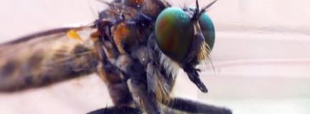 Pedido Control de Plagas Mosquitos