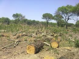 Pedido Estudios de impacto ambiental