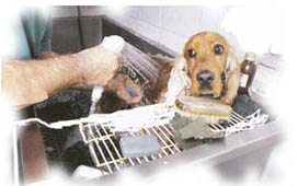 Order Services of barbershop for animals