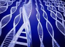 Pedido Transeferencia embrionaria