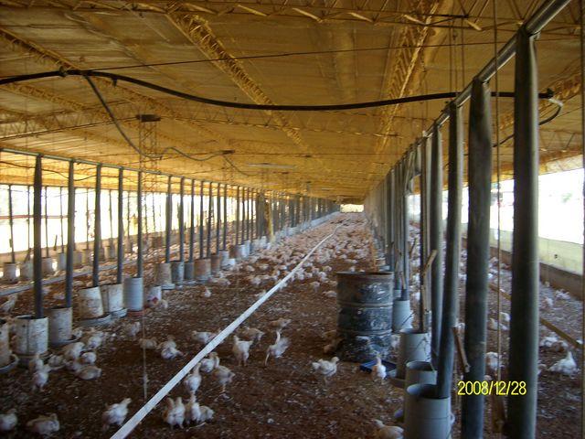 Pedido Aplicaciones del Spray de poliuretano en criaderos de pollos.