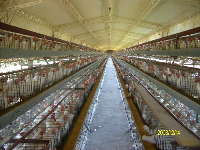 Pedido Aplicaciones del Spray de poliuretano en gallineros