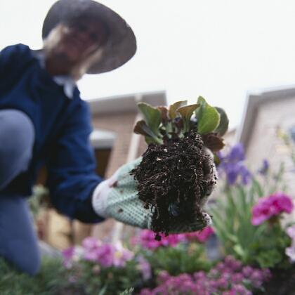 Pedido Servicios de Jardinería