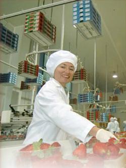 Pedido Sector Alimentario - ISO 22000