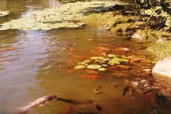 Lagunas, Estanques Y Canteras Siembra Y Saneamiento!!
