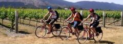 Alquiler y excursiones en bicicleta