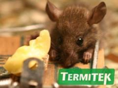 Desratización. Control de ratas