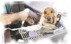 Servicios de cuidado por los animales