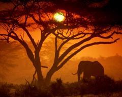 Tour Kenia
