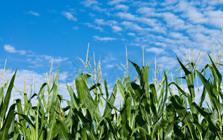 Calidad comercial de granos