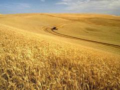 Servicios de inversion en agricultura
