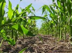 Seguimiento integral de cultivos