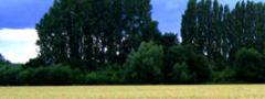 Margenes Agropecuarios