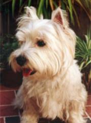 Baño y Peluquería Canina Profesional a Domicilio