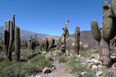 Excursiones - Quebrada y Puna, Tierra de Colores y Sal