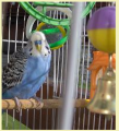 Pension de pájaros