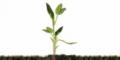 Formulación, Análisis, Ejecución y Administración de Proyectos de Inversión