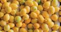 Prodicción de Limas y Limones